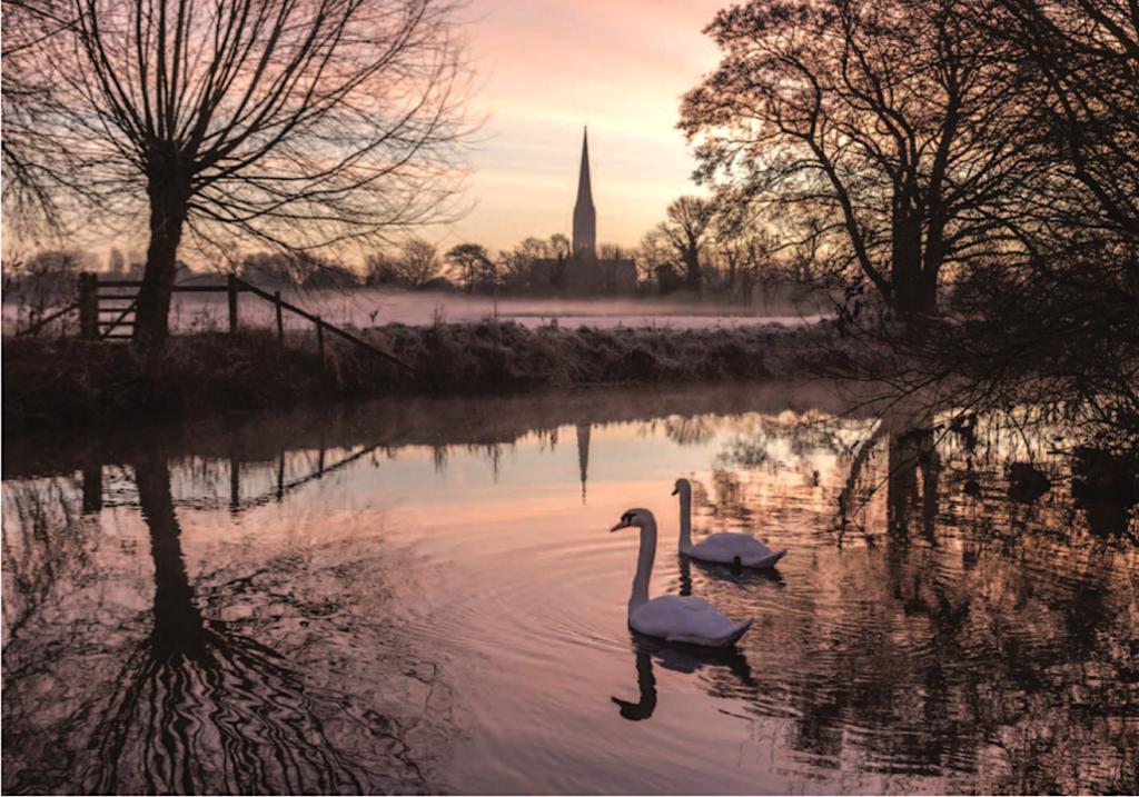 Christmas Swans Card 2019